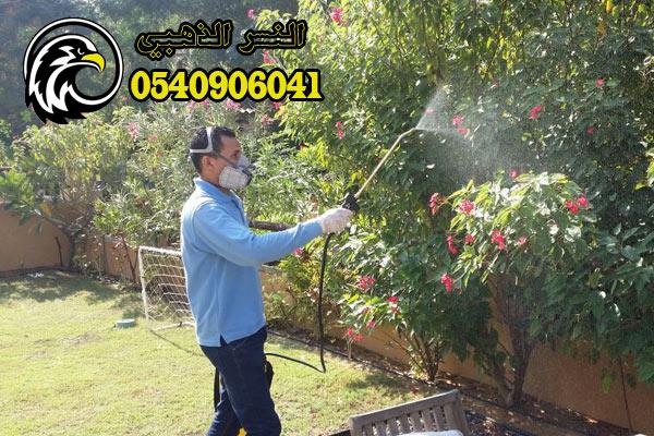 تنظيف حدائق بالمدينة المنورة
