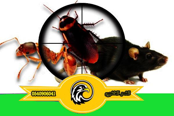 شركة مكافحة حشرات بالمدينة المنورة مضمونة
