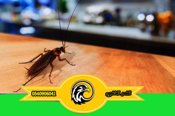 شركة مكافحة صراصير بالمدينة المنورة مكافحة حشرات