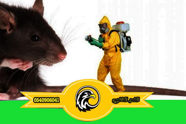 شركة مكافحة فئران بالمدينة المنورة مكافحة حشرات