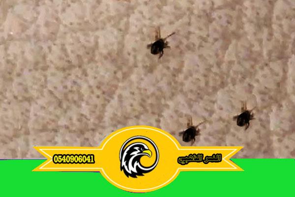 طرق إبادة بق الفراش مكافحة حشرات